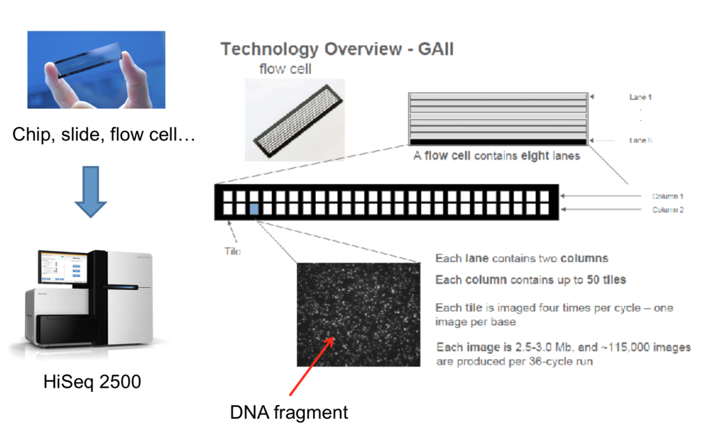 How Sequencing Works Ngs Analysis