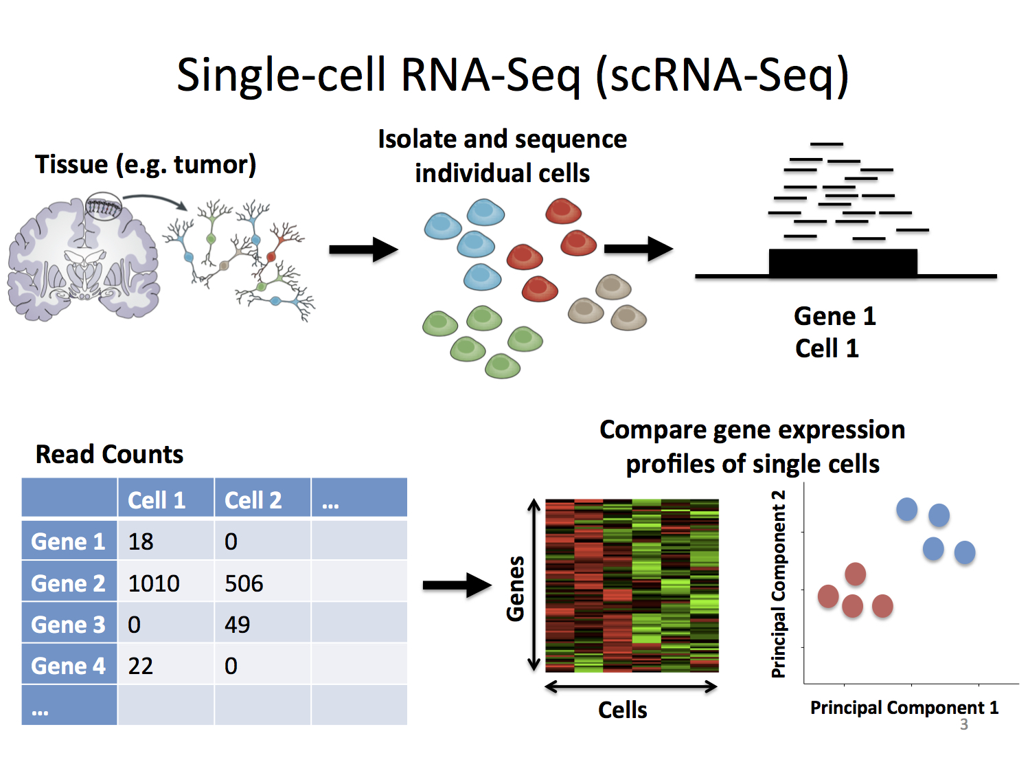 Single cell RNA sequencing – NGS Analysis